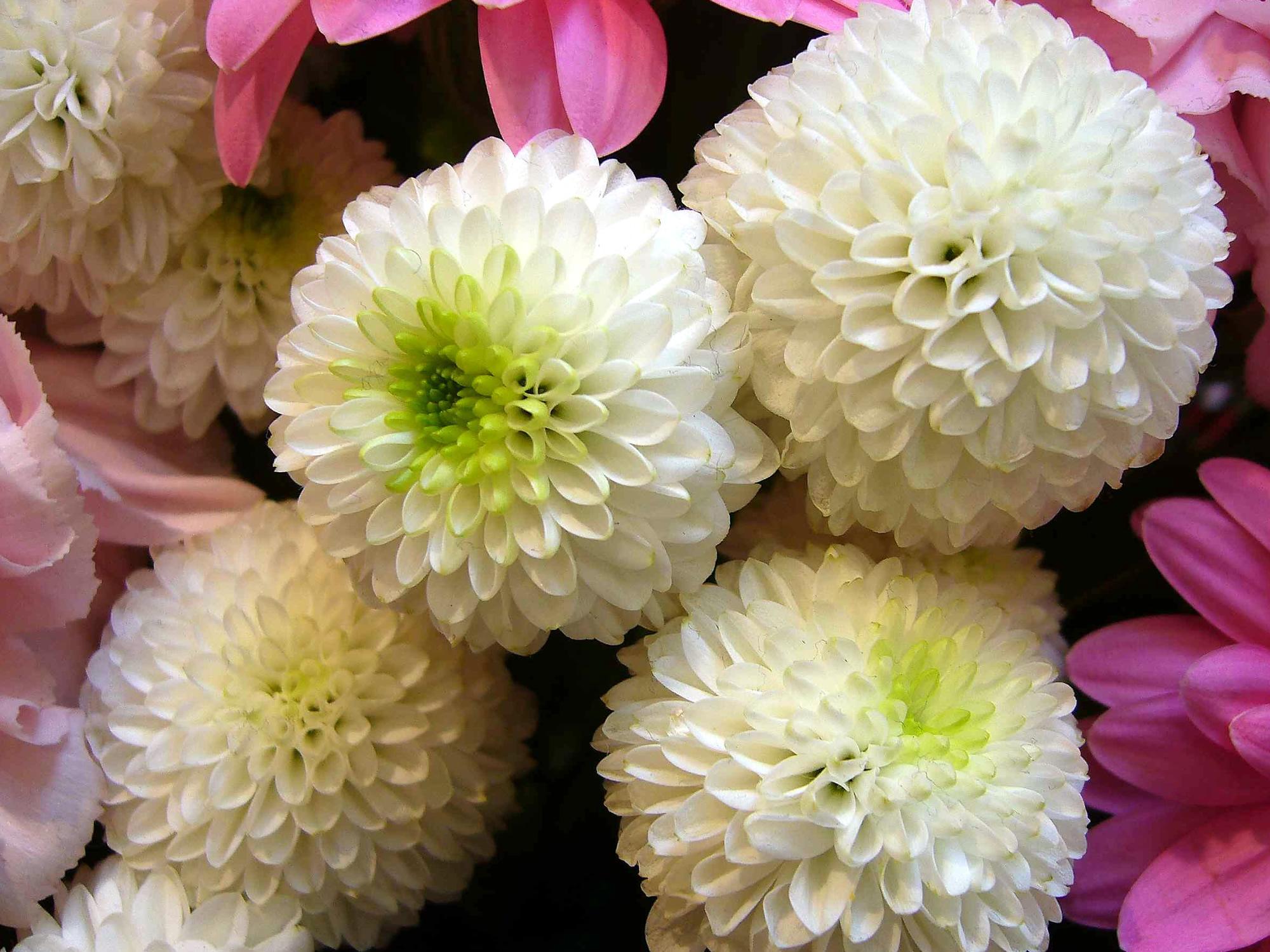 【京都結婚式準備】花嫁和装にぴったりのお花は?~洋髪スタイル~