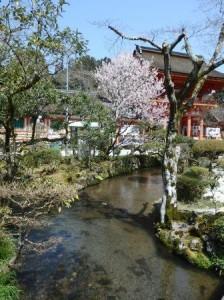 【前撮りレポート】上賀茂神社での家族撮影