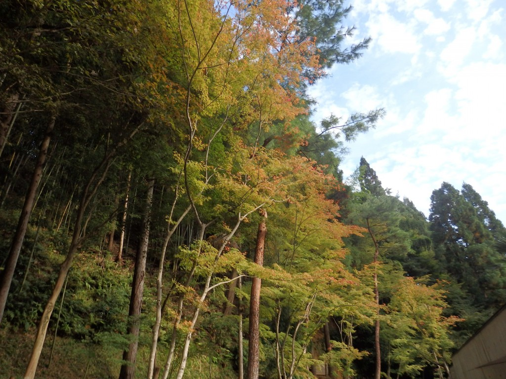 【京都×結婚式】おふたりの一生の想い出にお邪魔しました♪